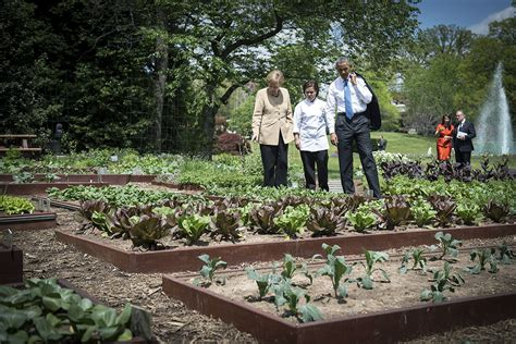 The White House Garden Gets Support To Endure From Burpee Obama Vegetable Garden