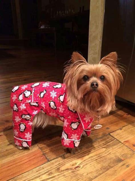 yorkie pajamas in pjs you want em we got em yorkie