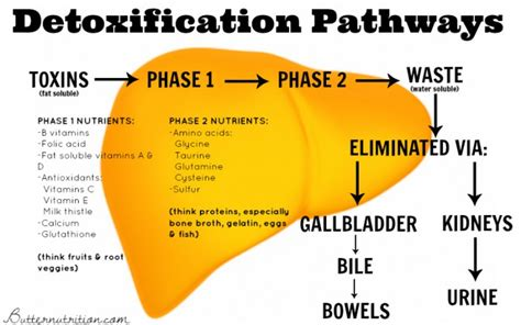 Withdrawal Detox Diet by 17 Signs Of Impaired Liver Detoxification And What To Do