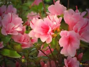 photo dans les jardins au printemps