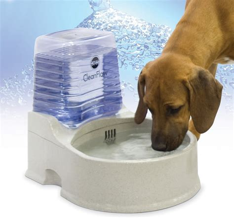 water for dogs k h pet products cleanflow filtered water bowl with reservoir for dogs large chewy