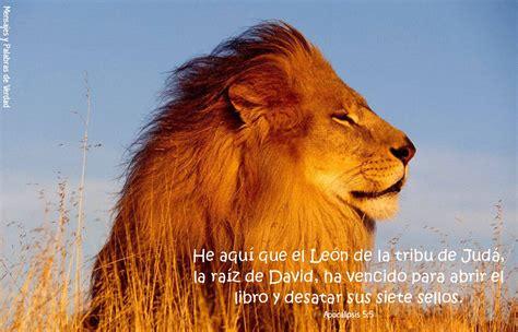 imagenes de leones con versiculos biblicos im 225 genes cristianas banco de imagenes im 193 genes de