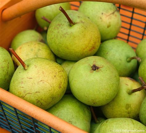 ecocola hybrid european vegetable dye for hair dallas fruit and vegetable grower fruit