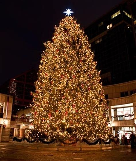 faneuil hall tree boston america s tallest christmas