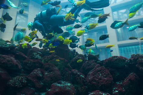 billy regal zubeh枚r aquarium bodenfilter bauanleitung aquarium pflanzen forum