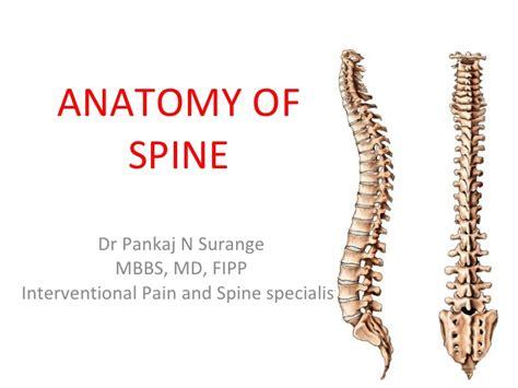 Anatomy Of Spine Cervical Spine Anatomy Ppt