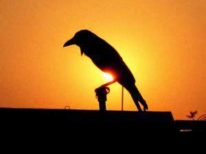 gambar burung gagak animasi korea meme lucu bergerak