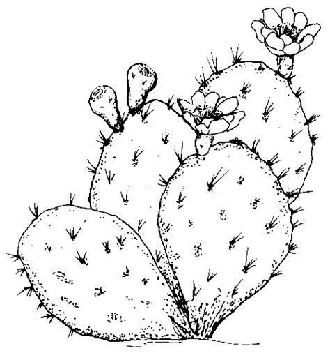 cactus flower coloring page cactus coloring pages and printables