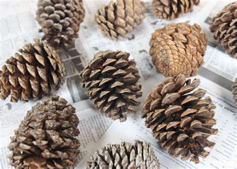 make your own scented pine cones soap queen