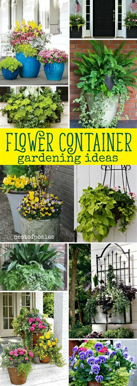 flowers for container gardening flower container gardening ideas