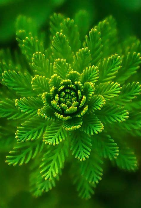 green algae plant wallpaper  desktop mobile phones wallpapers find