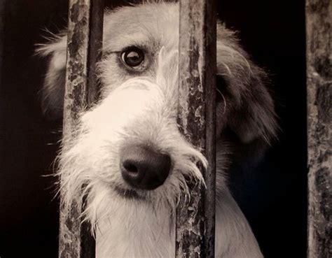 imagenes de animales maltratados maltrato animal en m 233 xico la otra cara de la cr 237 sis del