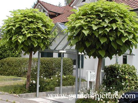 Indoor Flowering Plants designer mop top hello hello plants amp garden supplies