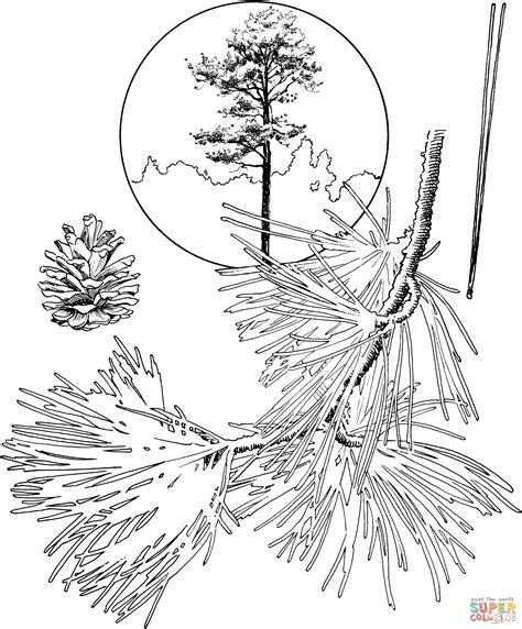 coloring page of pine trees coloring pages pine tree az coloring pages