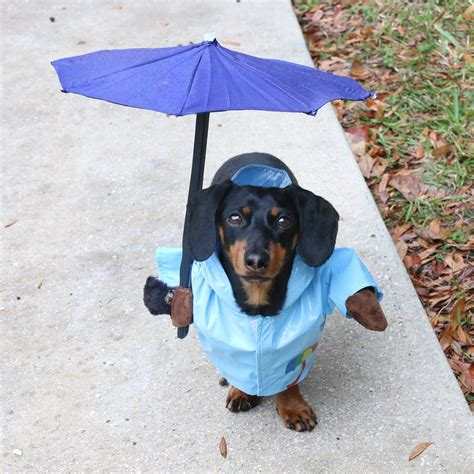 puppy umbrella costume w gun umbrella costume hockey costume etc