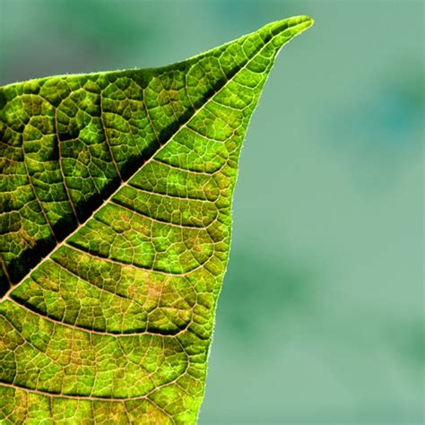 geometric pattern found in nature geometric patterns in nature