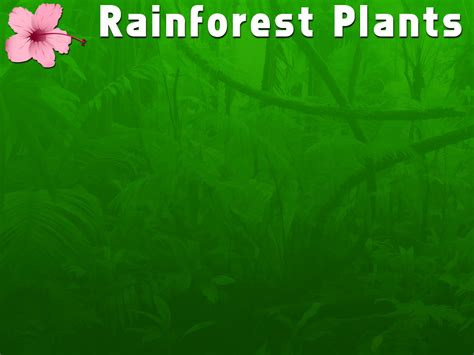 Rainforest Plants Powerpoint Template Adobe Education Rainforest Powerpoint