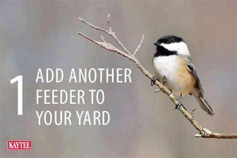 4 ways to celebrate national bird feeding month