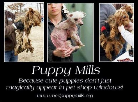 puppy mills in pa petition 183 tom corbett governor of pennsylvania puppy mills 183 change org
