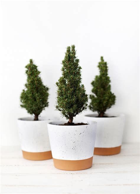 mini christmas trees packed with joy and cheerfulness