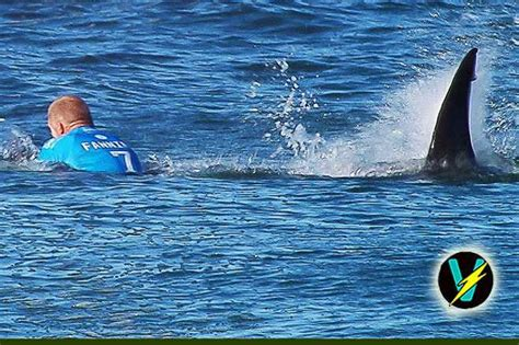 shark getting dragged behind a boat watch the terrifying moment a surfer is attacked by a shark