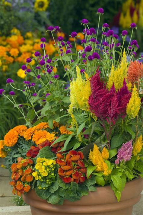 Flowers For Container Gardening Pretty Fall Container Garden Inspiration Gardens Beautiful And Flower