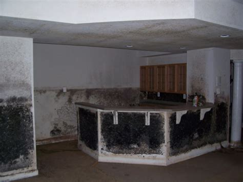 basement mold remediation mold remediation commercial residential mold removal