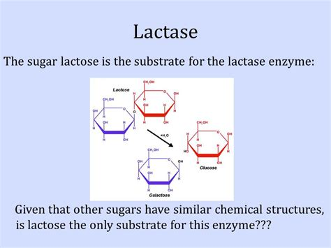 diagram of lactose and lactase reaction diagram and description of lactose lactase reaction images