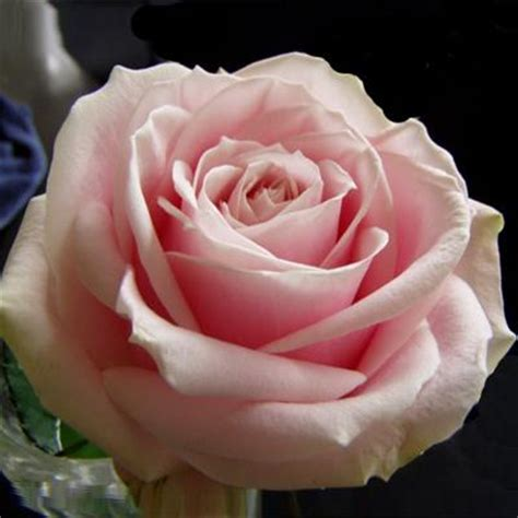 Sweet Table Vases Rose Avalanche Sweet Achat Vente Rose Coupes En Vrac Pour
