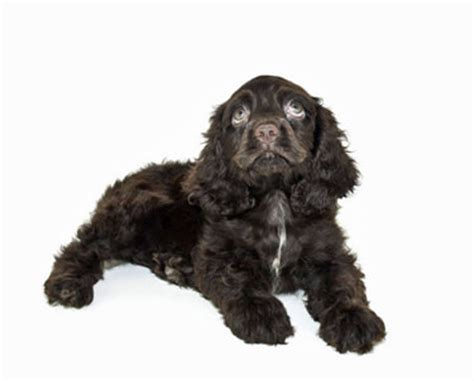 why do potty trained dogs pee in the house potty training your puppy house training dogs the easy way