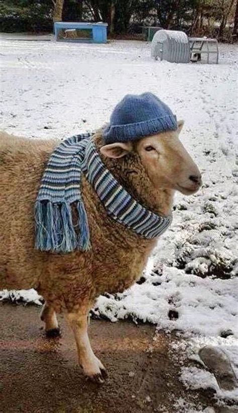 Madonna Is Not A Friend To The Sheep by The 25 Best Cold Weather Ideas On