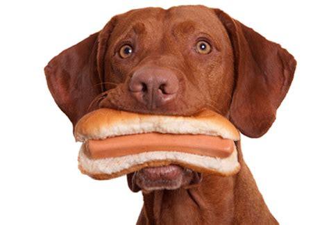 imagenes gif graciosas con movimiento imagenes muy graciosas con movimiento de perros imagenes