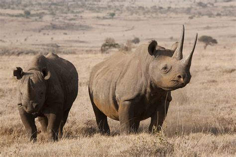 endangered african animals drive south africa