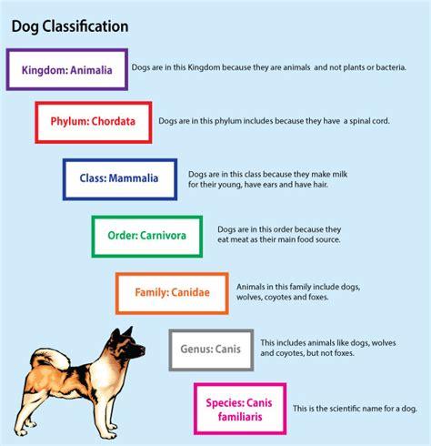 kingdom dogs keeping organized with taxonomy