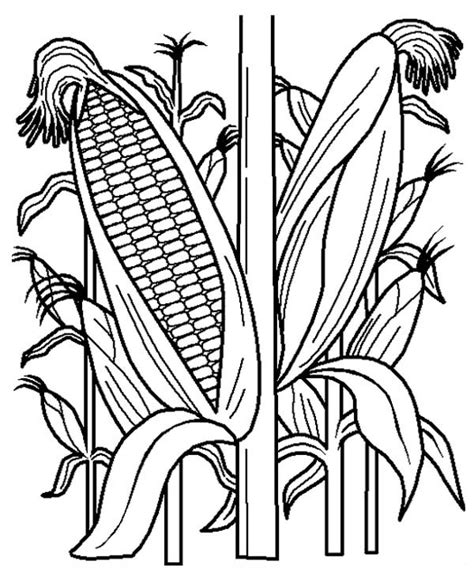 Corn Stalk Coloring Page Coloring Home Corn Stalk Coloring Page