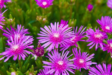 pretty plants jeffrey friedl s blog 187 pretty flowers a fly and some onions