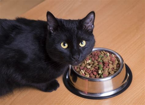 eats cat skin disease due to food allergies in cats petmd