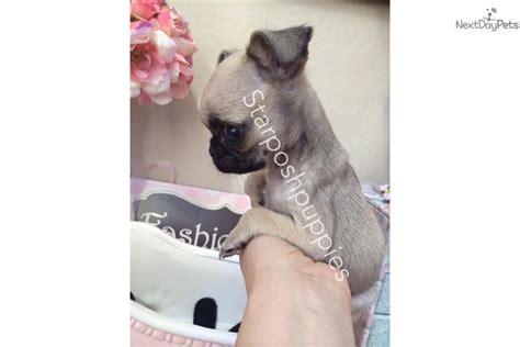 micro pug price pug puppy for sale near arizona 09a9342a 3e01