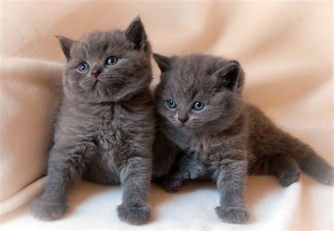 wallpaper cats baby kittens baby kitten cat wallpaper 2048x1419 124794