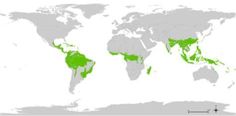 Buku Why The Earth Bumi Free Sul wilgotny las r 243 wnikowy wolna encyklopedia