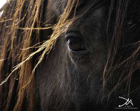 pictures mustang horse with smoke 67 best mustangs images on pinterest beautiful horses