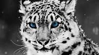 Animals  Photo 16174979 Fanpop Page 2