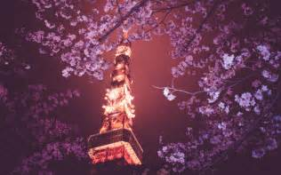 cherry blossom wallpaper night browse wallpapers with