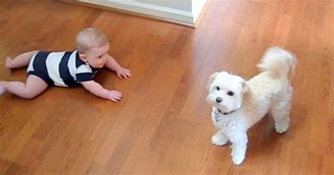 baby in bathtub laughing at dog dog performs funny dance routine to get treats keep your