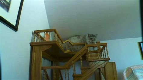 cat house designs indoor cat house plans indoor