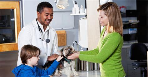 Mba Veterinary Medicine by Doctor Of Veterinary Medicine Dvm Schools