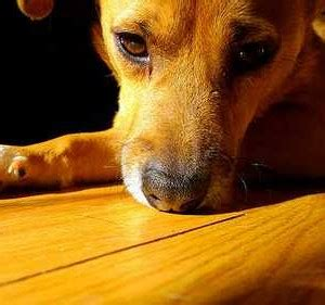 best flooring for dogs nails