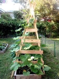 growing zucchini on a trellis vertical zucchini trellis gardening