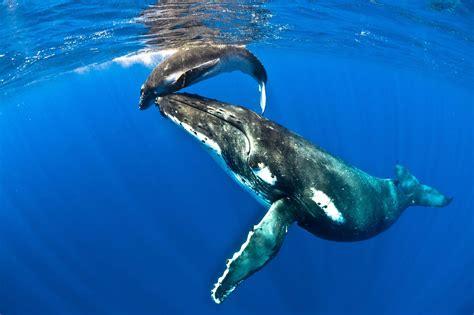 niue dive dive niue diving tours
