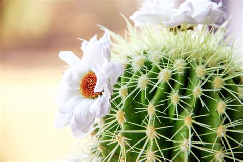 Purple Color Names by Cactus Flower Meaning Flower Meaning